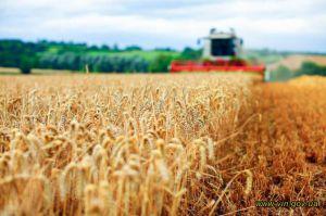 Вінниччина: Шість мільйонів тонн зерна вже у коморі,  але комбайни ще в полі
