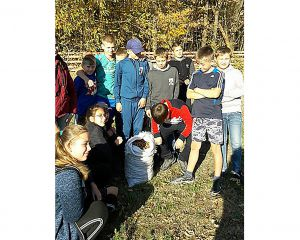 Житомирщина: Виростуть із жолудів діброви