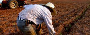 Аграрії Сумської області одержать більше дешевих кредитів