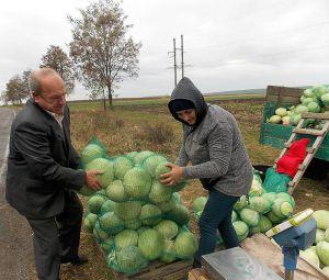 На Івано-Франківщині капусту досі реалізують з поля