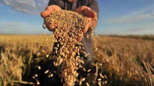 Зерновые рекорды Тернопольской области