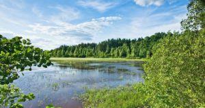 В Ривненской области создают биосферный резерват