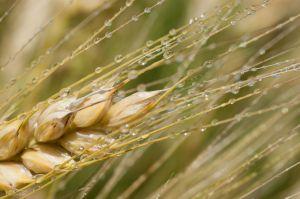 Україна збільшила експорт зернових