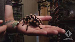 Тысяча ядовитых пауков в квартире одессита Сергея Кудряшова