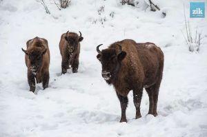 В Сумской области посчитают поголовье диких животных
