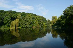 В Киеве хотят расширять «Голосеевский» парк