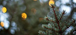 У Херсоні новорічні ялинки утилізують