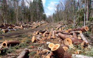 Влада Чернігівщини просить допомогти в порятунку лісів