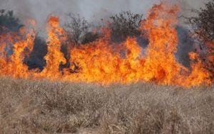 На Херсонщині знову горить дельта Дніпра