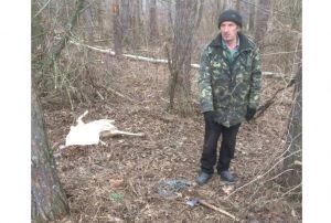 На Черкащині від рук браконьєра загинули косулі