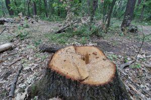 Через безкарність лісокрадів діброви Житомирщини тануть на очах
