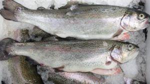 Україна експортувала мороженої риби на мільйон