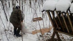 В Тернопольской области посчитали охотничьих животных