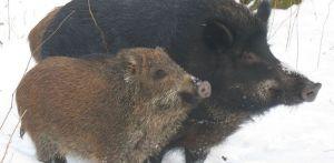 На Днепропетровщине завершился зимний учет животных