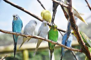Одеса: Митниця дала добро папугам