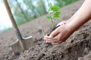 У Львові з'явиться парк з іменними деревами