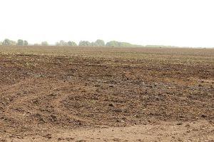 Земельні аукціони збільшують фінансовий «урожай» громад Полтавщини