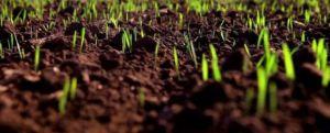От кризиса в Хмельнцкой области спасаются на полях и огородах