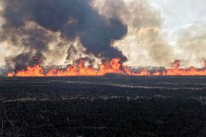 Суха трава горить повсюди