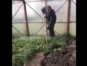 На знак протесту фермер Микола Кипоренко знищив вирощену цибулю