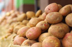 Картопля у селян пропадає, а ми закуповуємо єгипетську