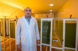 «Ароматы» спиртзаводов поглощают водоросли