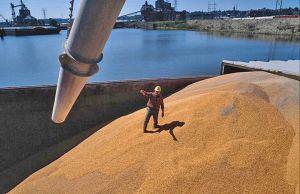 Зерно спешит в порты — вывезли рекордное количество