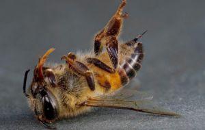 На Хмельниччині на пасіках загинули сотні тисяч бджіл