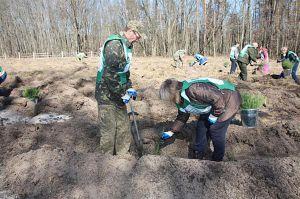 Державні лісгоспи Сумщини збільшили внесок до бюджету