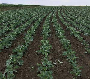 Усе сподіваємося на той десятий рік, урожайний