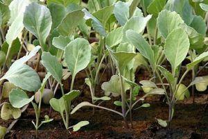 Весна: время садить овощи