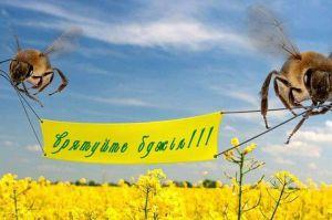 Голова Чернігівської ОДА став на захист бджіл