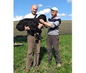 Вівчарство на мільйон