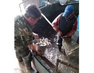 Черниговщина: мужское дело — спасать реку