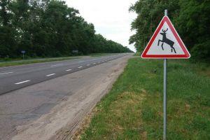 Черниговская область: «Дикие животные» — на автодорогах