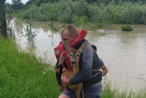 На Буковине спасали косуль-«робинзонов»