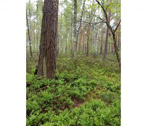 Уникальный естественный лес в Ривненской области получил статус пралесов