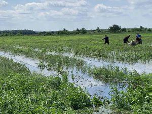 Волинь: Під водою врожай і надія селян