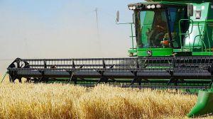 Аграрії сподіваються, що перекупникам не вдасться збити ціну на зерно