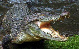 Курорты Херсонской области заселили тигры, крокодилы и страусы