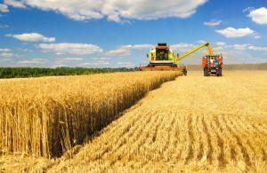 Болгария: Хлеб не подорожает, но урожай будет бедным
