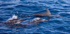 Дельфинов спасли из ловушки