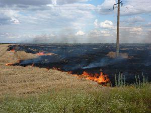 Поджигателей стерни в Херсонской области штрафы не пугают