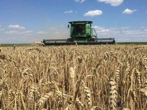 Вінниччина:  Перший мільйон тонн зерна зібрали за строкатих намолотів