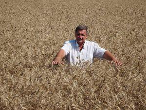 Дев'ять тонн озимої пшениці на круг цілком реально