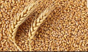 На экспорт отправили 8,8 млн тонн зерновых