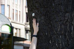 Львов: Программисты разработали  систему инвентаризации деревьев
