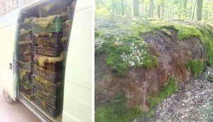 На Житомирщине повредили уникальный  геологический памятник