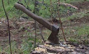У Святошині тишком-нишком знищили ліс!