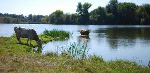 Сумщина: Землю и водоем вернули людям